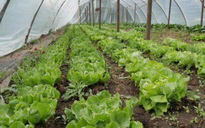 groentepakket week 22 2020