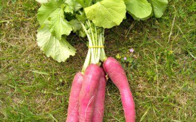 groentepakket week 24
